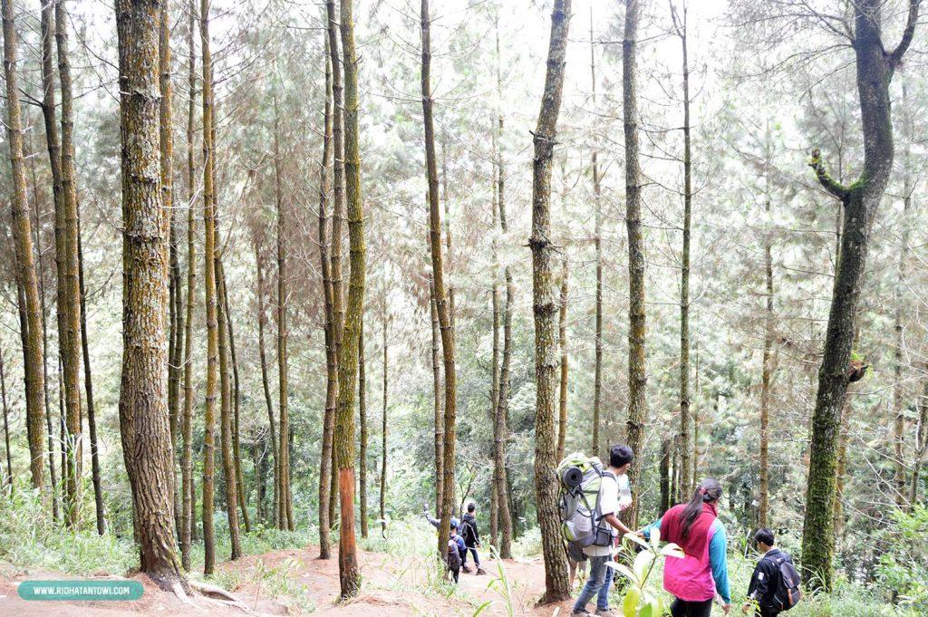 cerita-perjalanan-hutan-gunung-andong