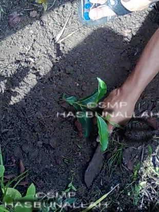 pertanian-smp-hasbunallah-tanjung
