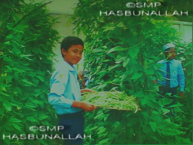 pertanian-smp-hasbunallah
